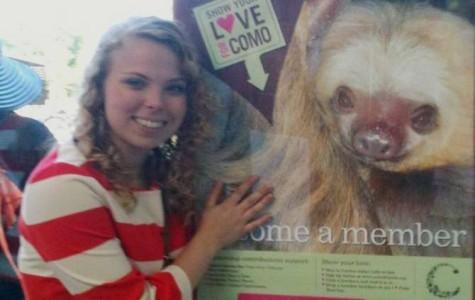 Sloths – a spirit animal