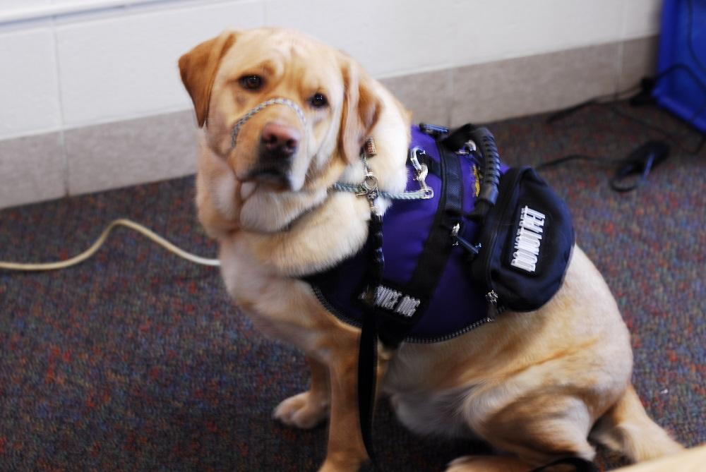 Service dog Kylo Ren stays vigilant near his master