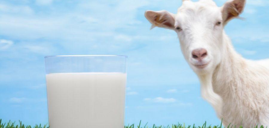 The Udder truth of got milk