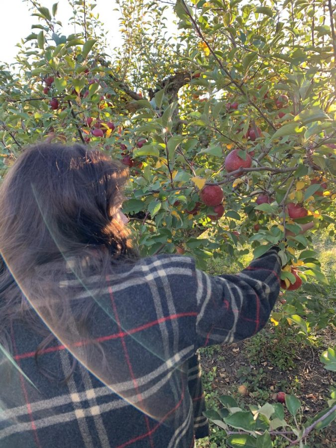 Newinski enjoys a nice, breezy, fall day out in an apple orchard.